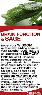 Boost your wisdom quotient by adding sage to your favorite foods. Sage is an outstanding memory enhancer. Chinese sage, contains active compounds similar to those developed into drugs used to treat Alzheimer's Disease. Sage has been used in the treatment Health And Nutrition, Health Tips, Health And Wellness, Health And Beauty, Health Recipes, Natural Medicine, Herbal Medicine, Chinese Medicine, Natural Cures