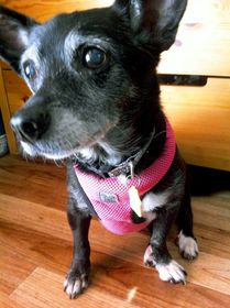 Please to help Betty find a home for the holidays! Dogs Up For Adoption, Dog Heaven, Old Dogs, Dog Park, Cute Baby Animals, Animal Shelter, Animals Beautiful, Dog Love, Best Dogs