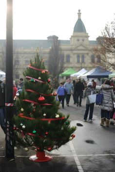 One of our little trees at Harvest Launceston Market's Christmas in July event (image by Chris Crerar).