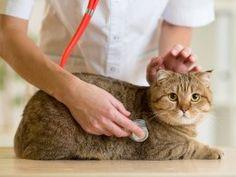 Feline Influenza - All About Cat Flu | Pets4Homes