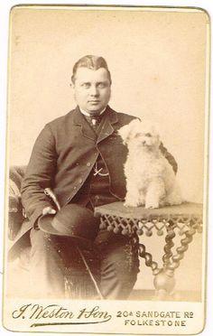 OLD CDV PHOTOGRAPH GENT  CUTE PET TOY DOG ON TABLE WESTON FOLKESTONE 1880 -90