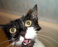 Google wet cat images if you need a good laugh.