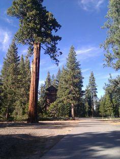 Sugar pine State Park Lake Tahoe