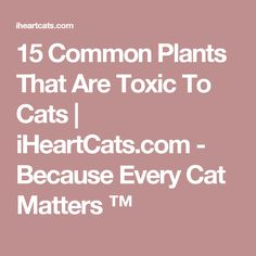 15 Common Plants That Are Toxic To Cats | iHeartCats.com - Because Every Cat Matters ™