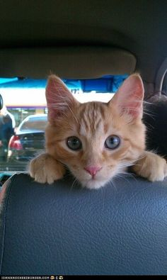 wahoo...we're goin' for a ride.....