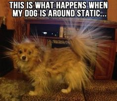 Wow!  hahaha, crackle dog!