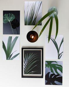 Nyheter fra Posterhouse.no🌱 Ta naturen inn i stua. Posters i smellvakkert print. Plant Leaves, Plants, Instagram, Nature, Flora, Plant, Planting