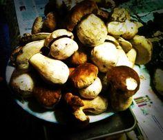 Funghi!
