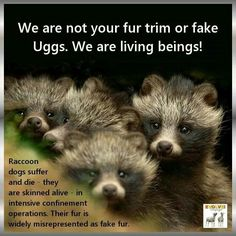 Uggs are ugly and filled with cruelty!