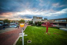 University of the Free State Bloemfontein Campus: Tree of knowledge (situated in front of the Winkie Direko Building) (Photo: Evert Kleynhans, RooistoelTV)