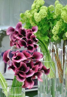 The color of 2014! Pantone anuncia a cor para 2014 – Orquídea Radiante | tempodadelicadeza