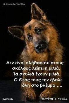 Words Quotes, Me Quotes, Sayings, German Shepherd Memes, Shepherd Dogs, German Shepherds, Animals And Pets, Cute Animals, Reality Of Life
