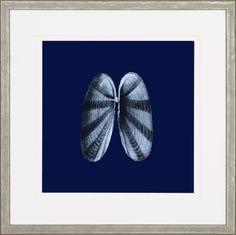 Midnight Shells Framed Art Print