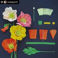"""""""#Repost @lmdolan75 with @repostapp. ・・・ Another pocket field guide installment for a perennial paper favorite.  #crepepaper #icelandpoppy #papavernudicale…"""""""
