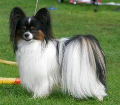 what a pretty little dog