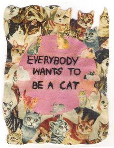 everybody wants to be a cat.