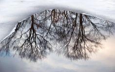 Reflection on ice. Photo by Sandra Goroff.