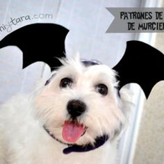 Free patterns to sew a funny dog bat wings hat for your dog or little pet perfect for Halloween. Make dog costume easily! Dog Clothes Patterns, Hat Patterns, Costume Patterns, Female Dog In Heat, Dog Coat Pattern, Vest Pattern, Free Pattern, Dog Tuxedo, Tuxedo Jacket