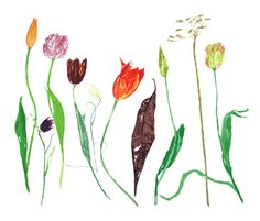 Tulips by Elizabeth Blackadder available at www.creativeartsgallery.com
