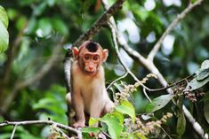 Small Monkey Breeds That Can Be Kept as Pets