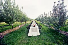 Apple Orchard Wedding | Longmont, Colorado | Wedding Table Ideas