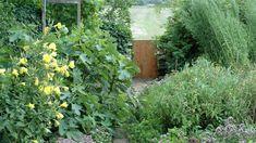 Odla kryddor på tre olika sätt – ordna en blandad trädgård, skapa en kryddträdgård eller odla i krukor eller baljor.