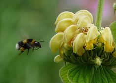 How Bees Carry Their Baggage