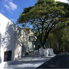 Árvore e muro verde