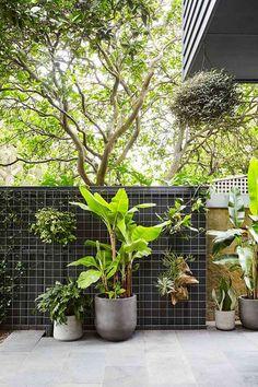 Bondi backyard beauty