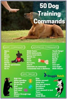 Dog Obedience Training Dogs Stuff - Resources For Dog Training Ideas And Tips *** You can get additional details at the image link. Online Dog Training, Dog Training Near Me, Training Your Puppy, Dog Training Tips, Potty Training, Training Classes, Service Dog Training, Obedience Training For Dogs, Crate Training