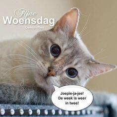 Fijne Woensdag Joepie-ja-jee! De week is... Cats, Animals, Healing Prayer, Happy Wednesday, Gatos, Kitty Cats, Animaux, Animal, Cat