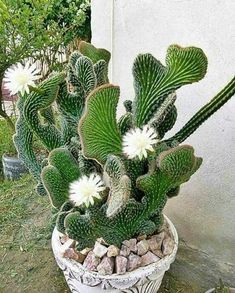 Excellent Free cactus plants ideas Suggestions Plants plus cacti will be the perfect property design pertaining to minimalists and pattern setters– withou Succulent Terrarium, Cacti And Succulents, Planting Succulents, Cactus Plants, Garden Plants, House Plants, Planting Flowers, Unusual Plants, Exotic Plants