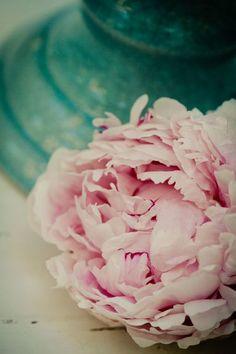 favorite flower!