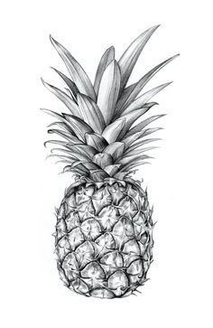 Pineapple Art Print by siblingandco Pineapple Drawing, Pineapple Art, Pineapple Sketch, Pineapple Clipart, Pineapple Painting, Orange Aesthetic, Future Tattoos, Painting & Drawing, Drawing Drawing