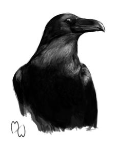 Raven painted on a somewhat slow weekend. Worked from a photo reference found on Google.