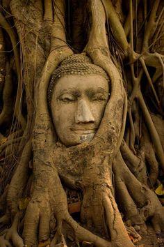 Tree grown around stone face
