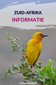 Hier lees je informatie over Zuid-Afrika, zoals de taal, geschiedenis, klimaat, geldzaken, grensdocumenten, bevolking en klimaat. Meer lezen doe je hier. Lees je mee? #zuidafrika #informatie #jtravel #jtravelblog