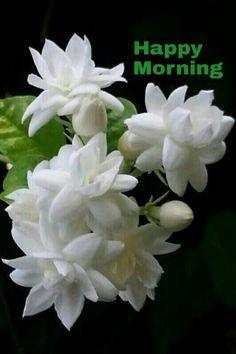 479 Best Good Morning Gif photos by sonusunariya Lovely Good Morning Images, Cute Good Morning Quotes, Good Morning Roses, Morning Qoutes, Good Morning My Friend, Good Morning Cards, Happy Morning, Morning Morning, Good Morning Picture
