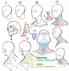 drawing the neck, shoulders, jawline, chin Drawing Reference Poses, Anatomy Reference, Drawing Skills, Drawing Poses, Drawing Techniques, Art Reference, Anatomy Sketches, Anatomy Drawing, Anatomy Art
