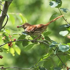 Birds and butterflies will flock to your yard when their three main needs -- food, water, and shelter -- are available, no matter how urban the setting. Learn how to satisfy the needs of nature's creatures.