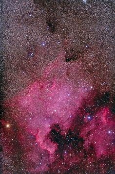 North America Nebula in Cygnus the swan