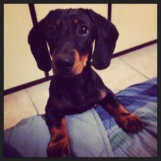 My baby ❤️ Biscotto