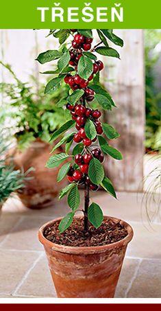 Fruit Vert, Plantation, Bordeaux, Flowers, Garden Ideas, Hass Avocado Tree, Guava Tree, Peach, Orange Trees