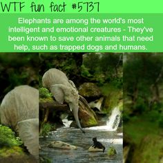 and Random Factoids to Shove in Your Brain - 39 Weird and Random Factoids to Shove in Your Brain - 39 Weird and Random Factoids to Shove in Your Brain - credit: A boy and his pup grow up :) WHAT? Wtf Fun Facts, Funny Facts, Random Facts, Random Animal Facts, Cool Facts, Trivia Facts, Awesome Facts, True Facts, Funny Memes