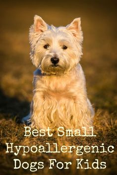 Wondering about the best small hypoallergenic dogs for kids? Check out our list of the best little breeds that are great for kids & people with allergies!