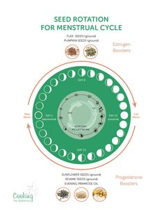 Seed chart showing how to use seed rotation to balance your hormones (and rebalance your menstrual cycle).