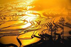 Google Image Result for http://meghancrossin.com/wp-content/uploads/2011/08/Yunnan_Yuanyang_ladder_fields.jpg