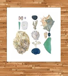 Fiji Beachcombing Photo Art Print by Quercus Design  on Scoutmob Shoppe