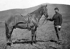 Famous Horses in History | HorseFix.com - Famous Horses - Comanche  Comanche was a Mustang/Morgan horse who survived General George Armstrong Custer's detachment of the United States 7th Cavalry at the Battle of the Little Bighorn.