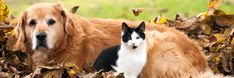 Top considerations for Fall pet safety. Ticks can spread disease to both you and your pet.